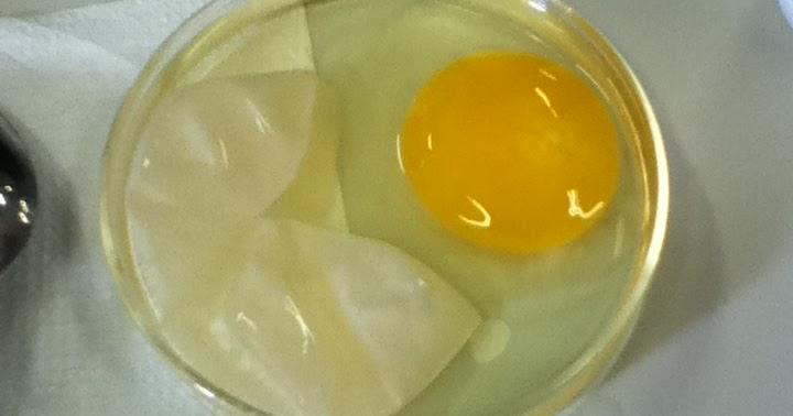 Gio E-Portfolio: Egg Lab