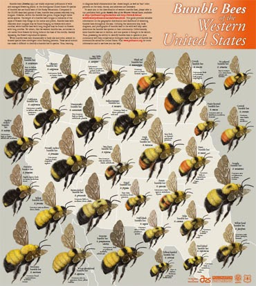 Westbeeposter on Honey Bee Life Cycle Chart