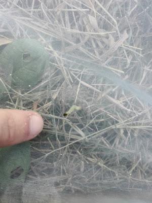 Proteggere l'orto dai bruchi con una rete