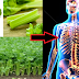 You Will Surely Eat Celery Everyday After Knowing It's Various Health Benefits To Our Body!