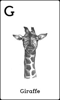 Hewan Jerapah dalam Kartu Animal 4D+