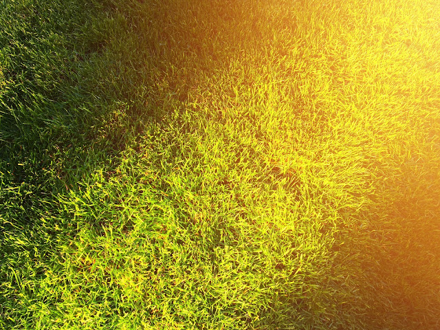 Ogrodowe zmagania- trawnik