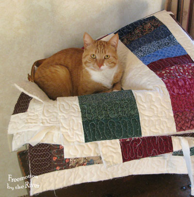 Cat sitting on my quilt