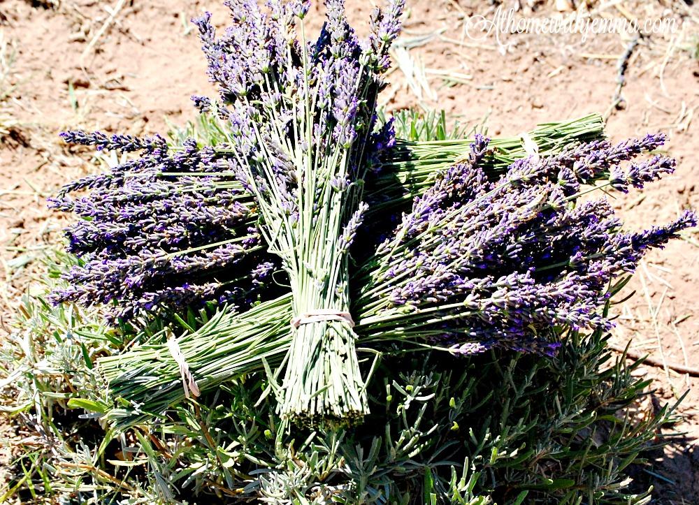 flower-farm-lavender-harvest-athomewithjemma
