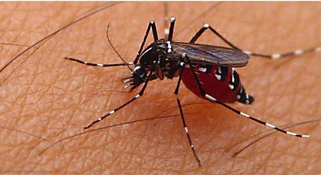 Nyamuk pembawa virus zika