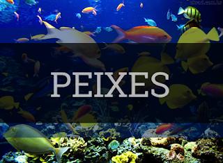 superclasse pisces peixes classificação características reprodução