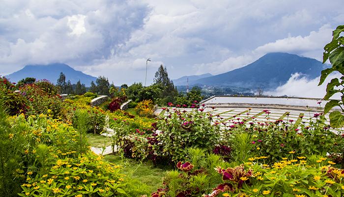 Taman Bunga di Agrowisata Kopeng Gunungsari dengan Latar Belakang Gunung Andong dan Telomoyo