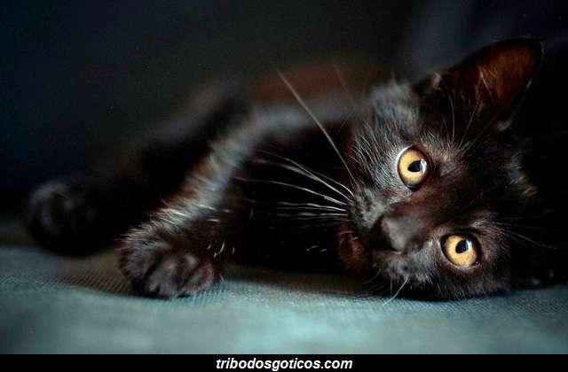 gato preto bruxas goticos