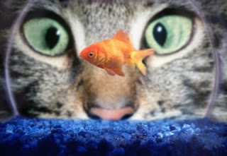 Mengurangi Stress pada Kucing