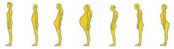 Bauchformen
