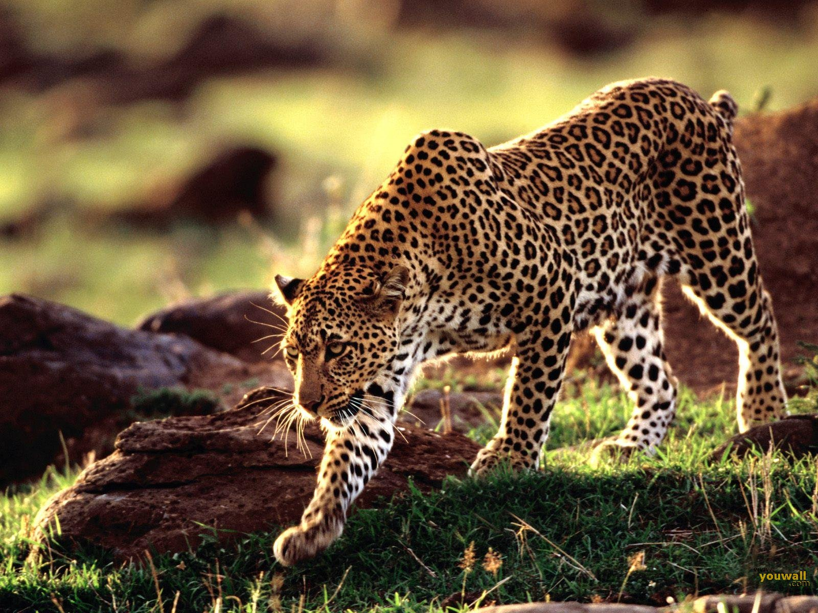 wild animal wallpapers | My HD Animals