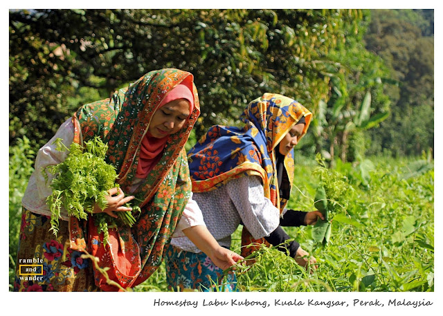 Homestay Labu Kubong, Perak, Malaysia | Ramble and Wander