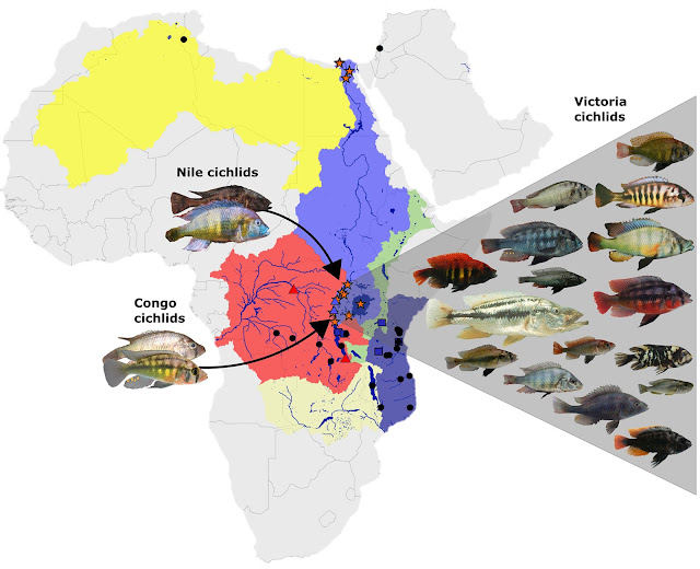 Explosion in species diversity due to hybridization