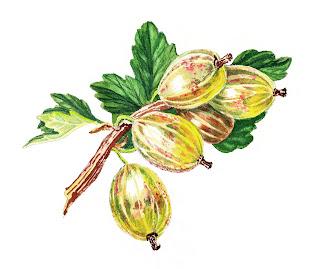 watercolors realism botanical art
