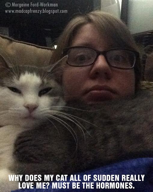 cats love pregnant ladies