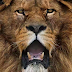 Check out these amazing closeup pics of big cats and other wildlife