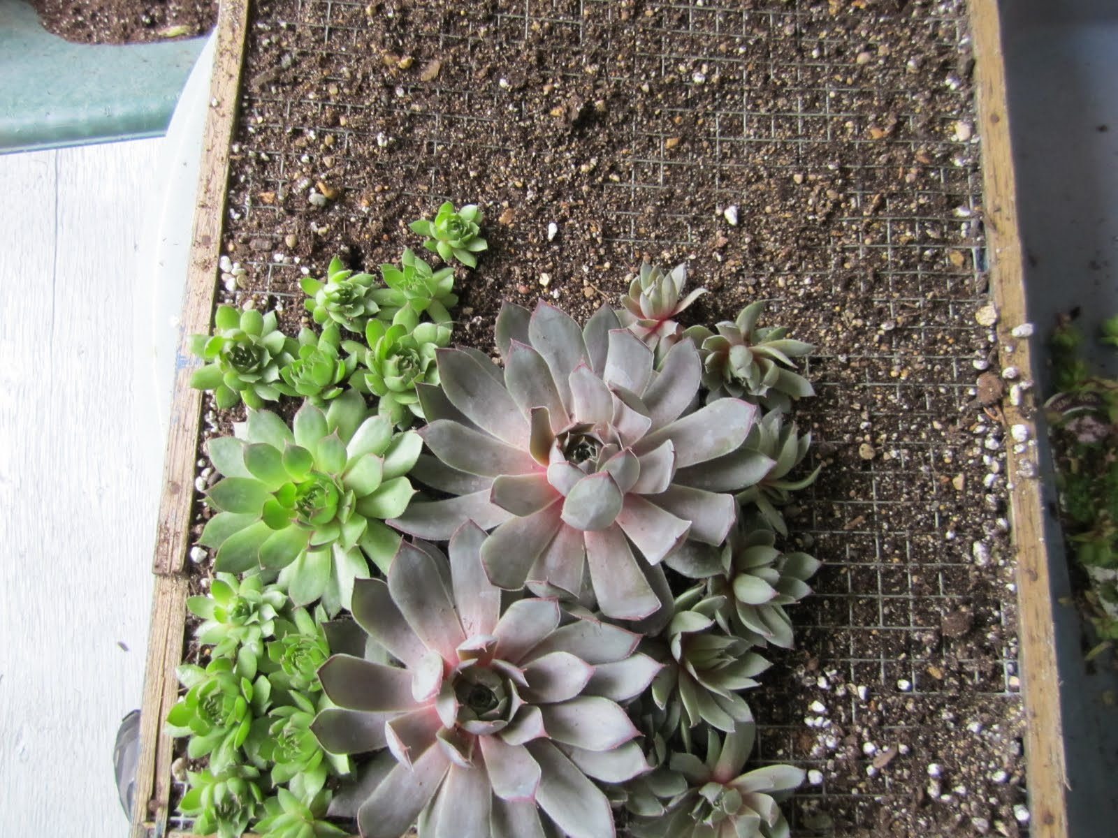 In marilyn 39 s garden succulent living wall - How to make a living wall ...