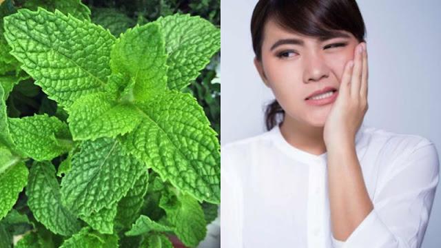 cara menghilangkan sakit gigi dengan daun mint