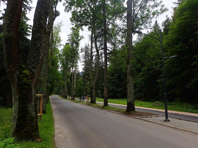 Droga w kierunku Kuźnic