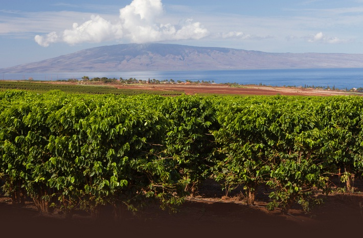 Hawaiian Kona Coffee Farms