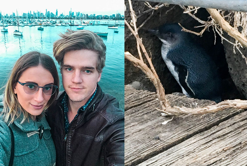 wild fairy penguins on st kilda pier