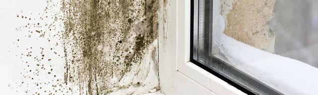 Grzyb oraz pleśń na ścianie, suficie w wilgotnym domu