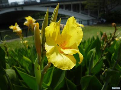 ユリのような黄色い花