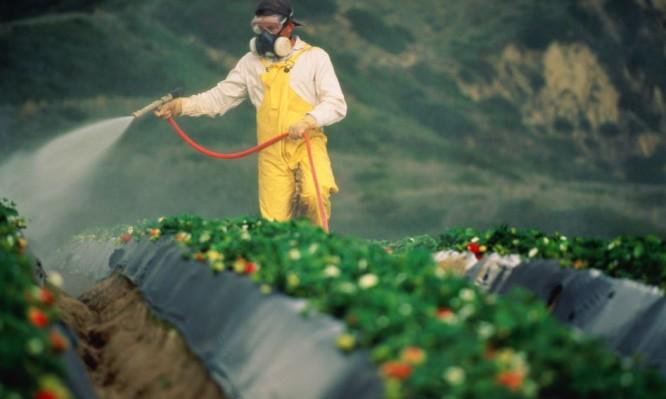 Φυτοφάρμακα σε φρούτα και λαχανικά: Ποια έχουν τα περισσότερα και ποια τα λιγότερα;