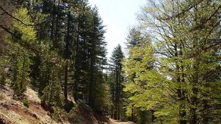 Νέα παράταση για τους δασικούς χάρτες