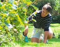 link-e-guide-giardinaggio-per-principianti