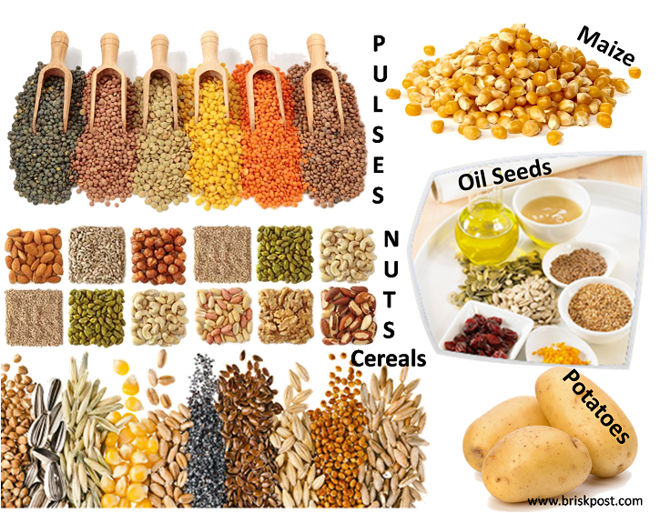 Starch Polysaccharides as Carbohydrate sources: pulses, nuts, cereal, maize, oil seeds, potatoes