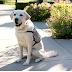 ΜΕΤΑ ΤΟΝ ΜΠΟΥΣ! Ο θεραπευτικός σκύλος του επέστρεψε στο σπίτι του...