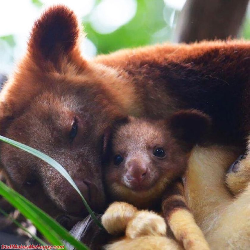 Tree Kangaroos Are the Nicest Plush Animals That Will Cause A Smile On Your Face