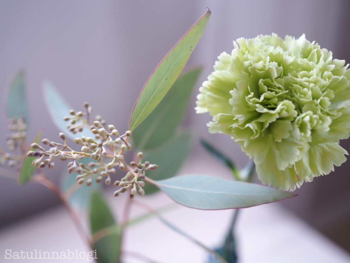 neilikka eukalyptus