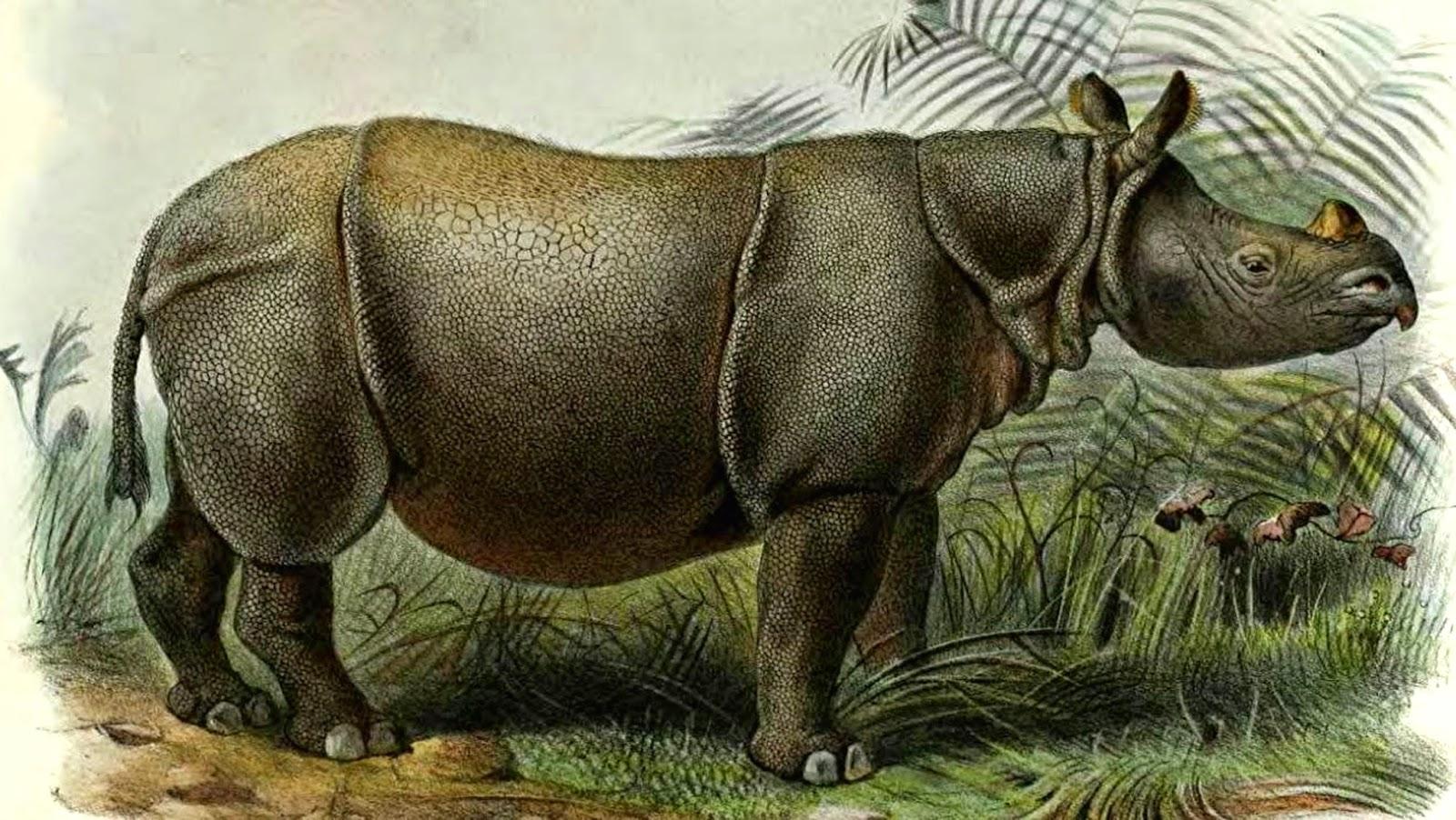 Shukernature Horning In On Indonesia S Scaly Rhinoceroses