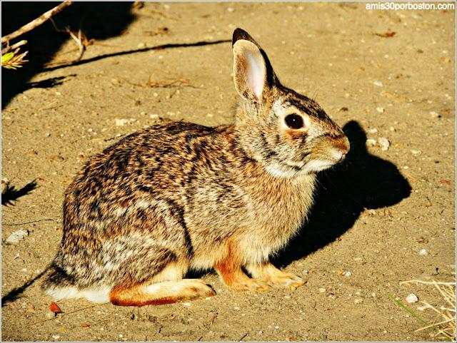 Fauna Texas