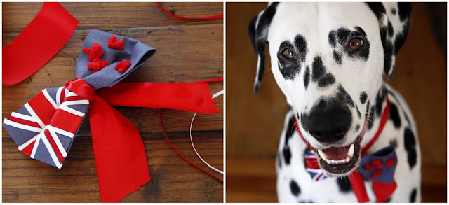 Smiling Dalmatian dog with New Zealand flag bow tie
