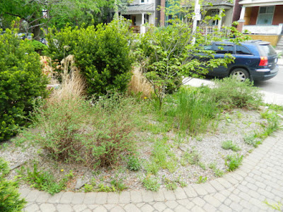 Leslieville summer garden cleanup before by Paul Jung Gardening Services Toronto