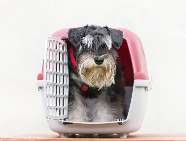 Jak dobrać transporter dla psa?