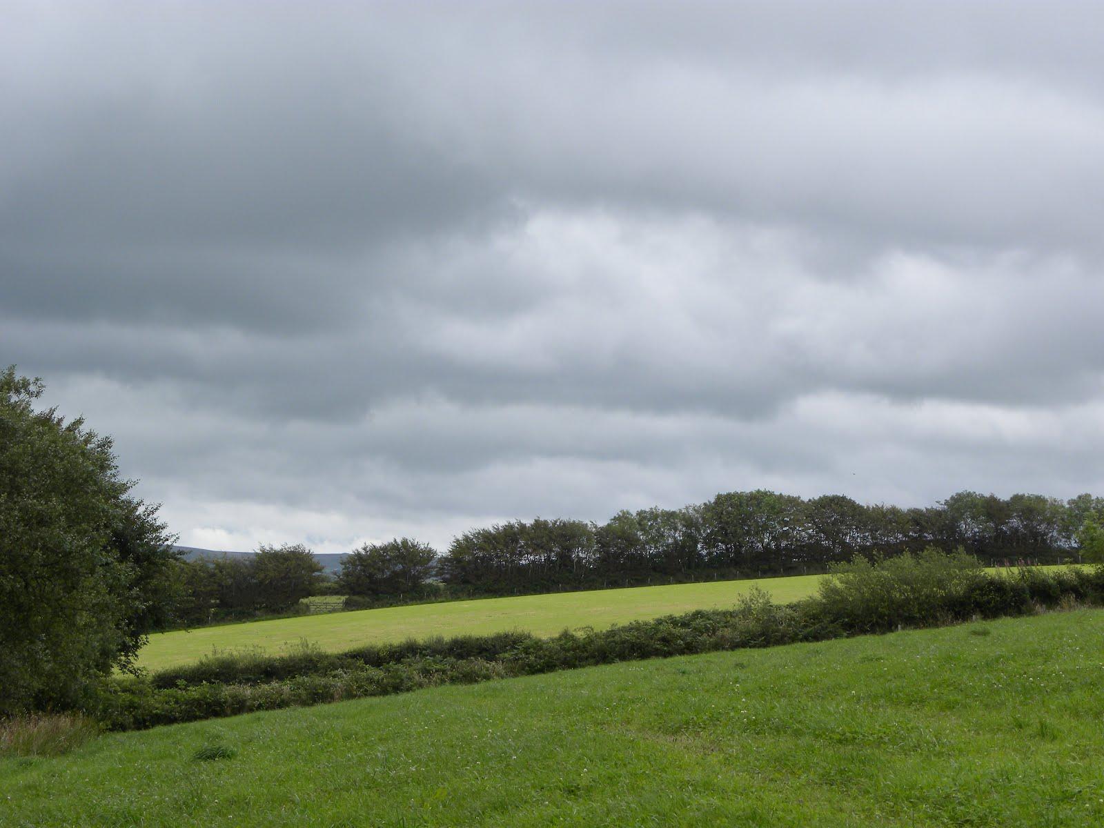 Ruta's Ramblings: Overcast.