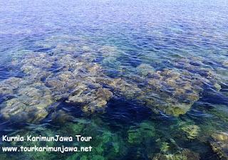 terumbu karang di pulau cilik
