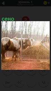 в загоне имеется сено для лошади