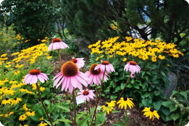 spiegare il lavoro della api ai bambini