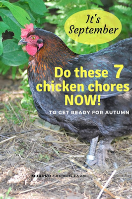 Getting your chickens ready for fall.