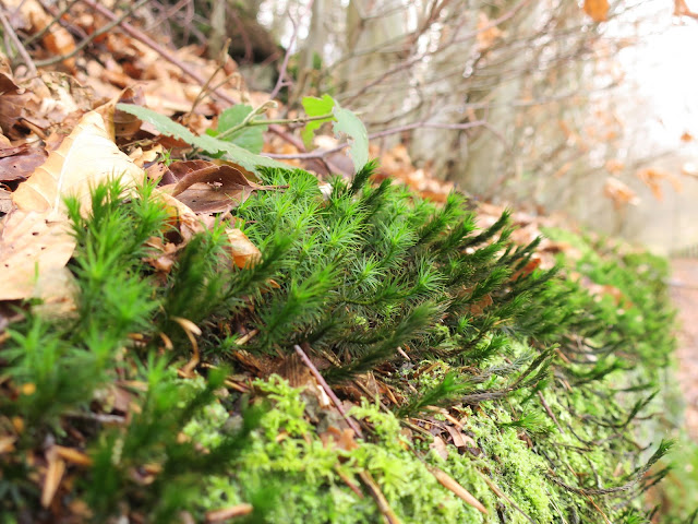 Bright green moss on bank in woodland with fallen leaves