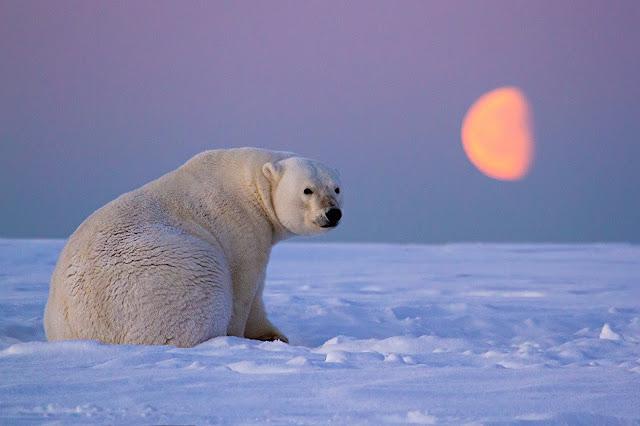 Resultado de imagen de Los animales sienten el cambio de las Estaciones por una respuesta a la duración de la Luz diurna.