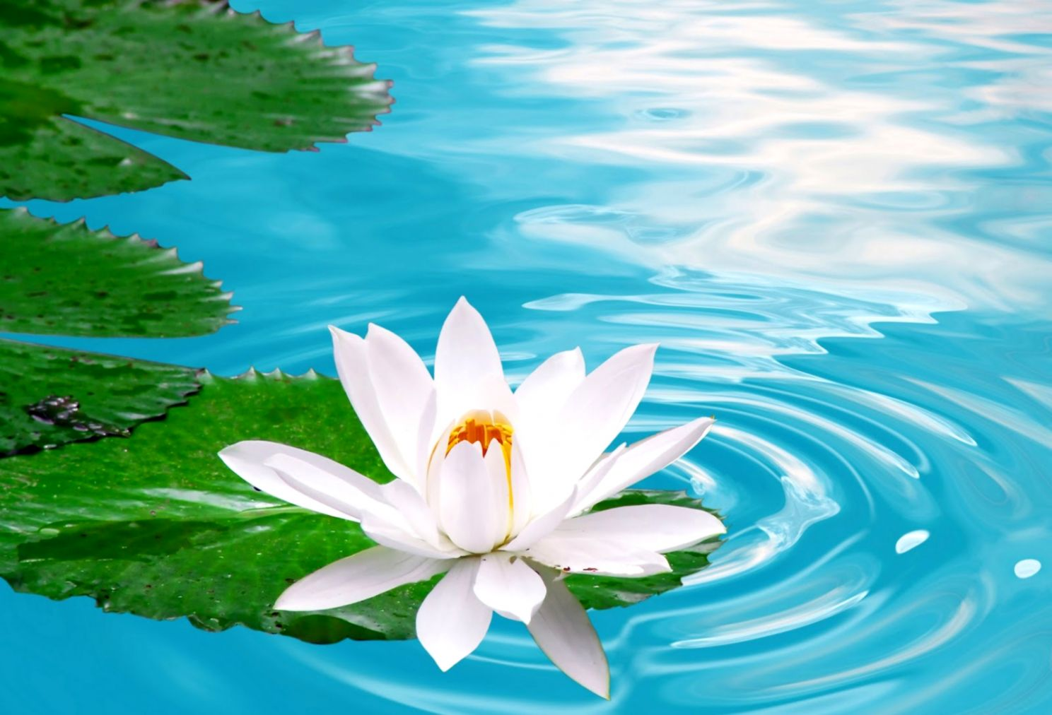 Flower Full Hd Photo Wallpapers New