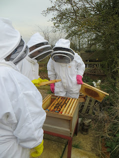 first hive inspection 2016