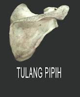 Bentuk-Bentuk Tulang Pipih