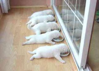 Cara memelihara anak anjing tanpa indukan